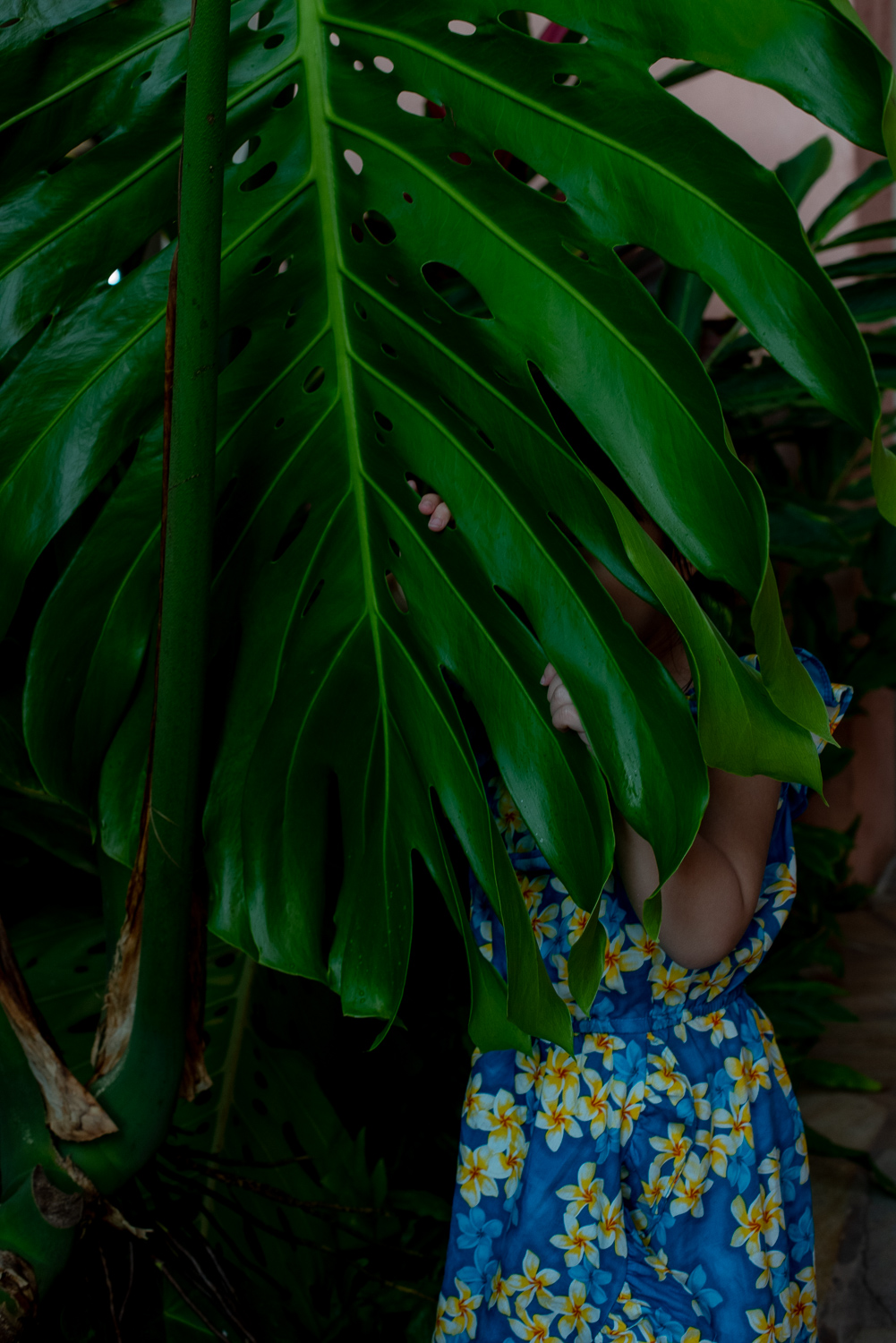 Small girl hiding behind large green leaf