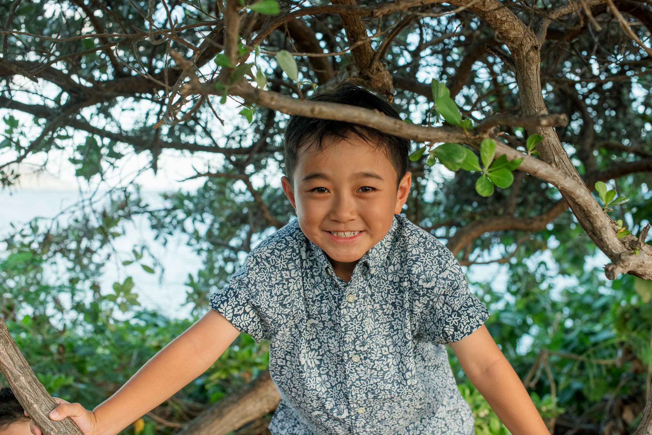 Young boy in tree